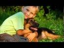собака друг человека песня