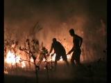 Пожар в степи. Северное причерноморье,исторический заповедник