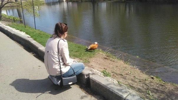 Оля нашла рыжую утку.