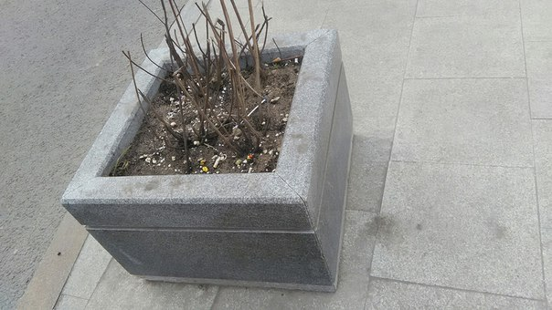 Вазоны в городе лишь делают вид, что они полезные. Ну или садовники никчёмны.