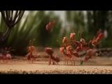 Сила в единстве (VHS Video)