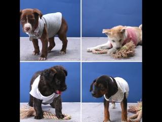 Одежда для собак из старых вещей