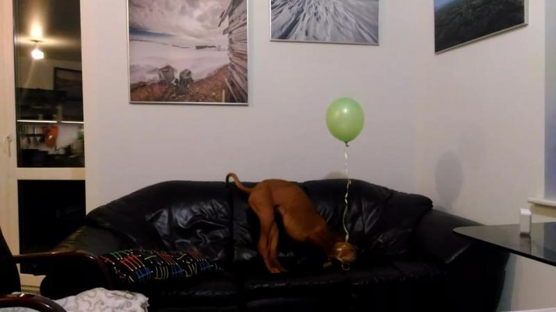 Софа и воздушный шарик.