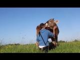 .Вот как должен выглядеть центр психологической реабилитации коров, по мнению AgroNews