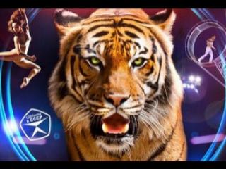 Российский цирк. Бенгальские тигры. Часть 3