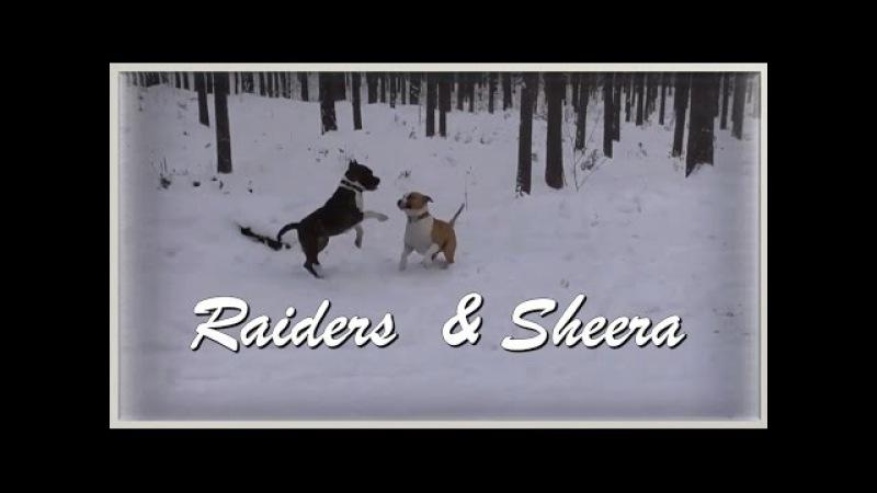Labākie draugi - Raiders Sheera - 09.11.16