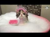 Все девочки любят ванну с пеной :)