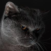 Рисунок профиля (id15005636)