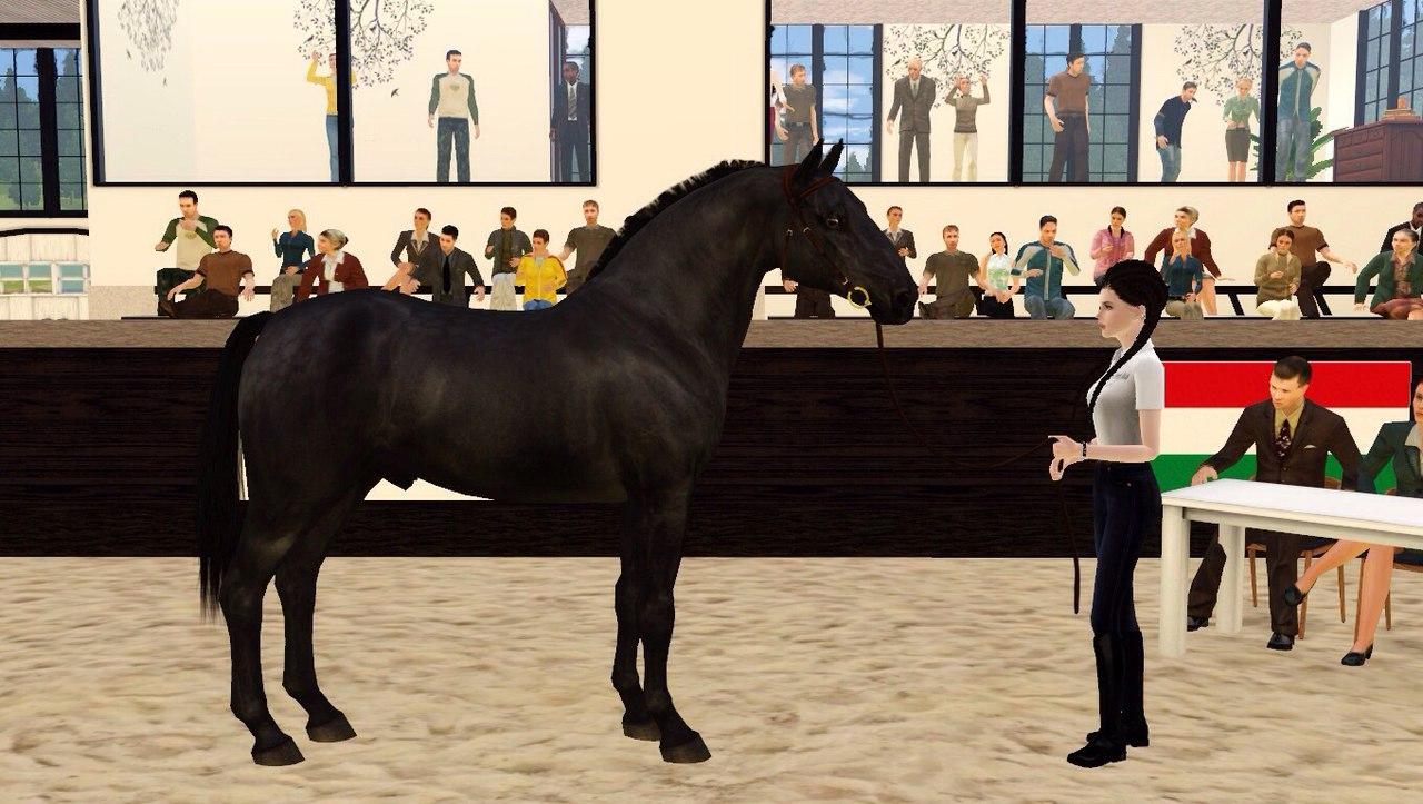 Регистрация лошадей в RHF 2 T1t0Z4HH88w