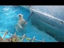 イッちゃん(Шилка)のエトセトラ 2017.4.15  天王寺動物園のホッキョクグマ