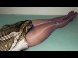 Giant Anaconda Eats Man Alive #2 - Giant Snake Eats Man - Giant Python Snake Attack Girls | HD