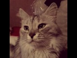 kaitlyn_golubtsova video