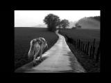 Смысловые Галлюцинации - Зверь 2