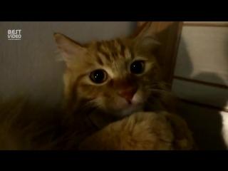 Кот торчит от пылесоса