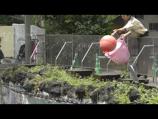 【4K】シロクマに飼育員さんがオモチャを投げた【天王寺動物園】 Keeper