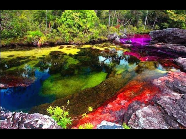 Caño Cristales biotope