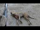 Счастливая история спасения раненой собаки