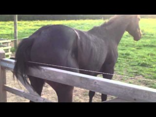 Electric fence horse