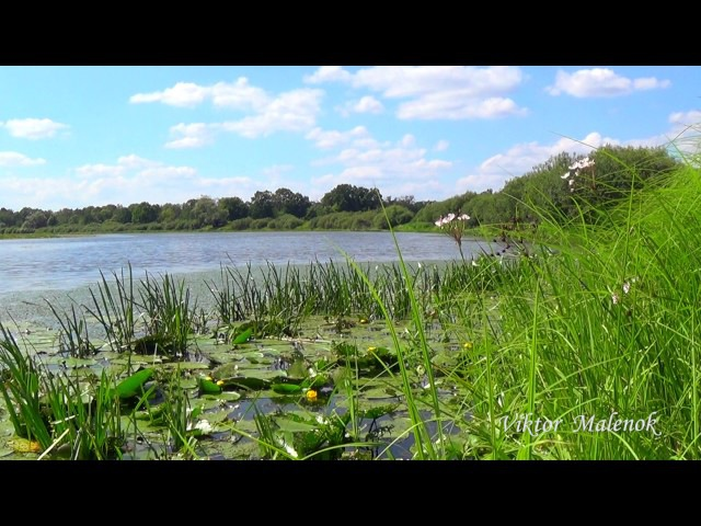 Река. Природа. Травы. Пение птиц. Музыка. Релакс. Медитация. Звуки природы. Место с...