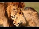 Эволюция животных. Битва за жизнь. Секс | History Channel HD