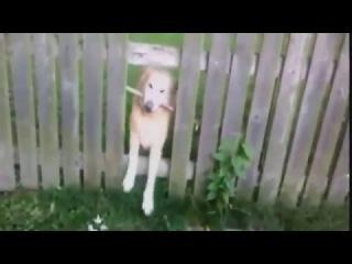 ТЕСТ НА ПСИХИКУ, ПОПРОБУЙ НЕ ЗАСМЕЯТЬСЯ !!! (Улетные кошки и собаки Приколы с животными)