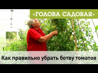 Голова садовая - Как правильно убрать из теплицы ботву томатов