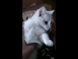 кошка - ебошка