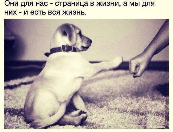 Фото №424794149 со страницы Евгения Шульги