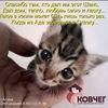Ковчег-негосударственный приют для кошек Астана