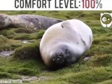A seal trying to get comfortable