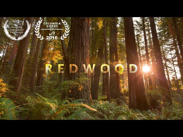 MTJP | Redwood