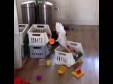 Funny Parrot (When u are alone at home)