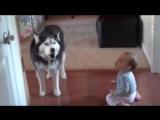 Это видео докажет вам - дети и собаки созданы друг для друга!