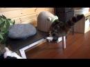 Кошка залезает в домик для котят