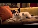 Сериал Disney Собака точка ком Сезон 1 Серия 2