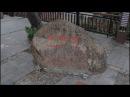 Санья, Китай Парк Олень повернул голову. Остров Хайнань.