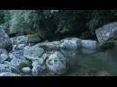 Forest Stream - Nature Sound 4K (Ultra HD) Footage - 白谷雲水峡/屋久島
