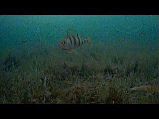Прогулка по озеру в поисках перспективных мест. Смолино. Focus Fish