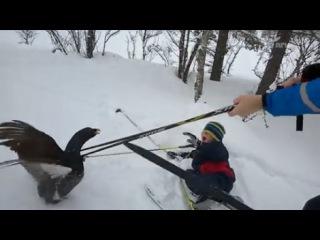 глухарь напал на лыжников