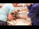 Спасаем бездомную собаку с пироплазмозом нужна помощь help save a dog спасите собаке жизнь