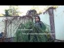 Уход за плакучими формами растений На примере хвойные растения лиственница