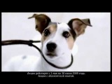 Музыка из рекламы Билайн - SMS весна (Россия) (2009)