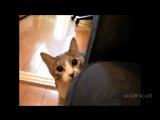 Смешные коты.Смешные кошки.кошки приколы,смешные приколы,смешные котята,кот,кошка,котик