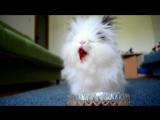 Кролик ест клубнику