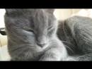 Котик зевает,