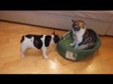 Кот занял не свое место