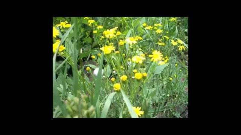 Природа - целитель всех болезней. Исцеляющее пение птиц на зелёной поляне.