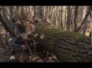 Следствие Вели с Леонидом Каневским - 250 Крыса (26.10.2013)