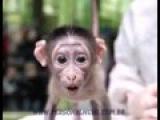 Macaco Reclamando Do Whatsapp .