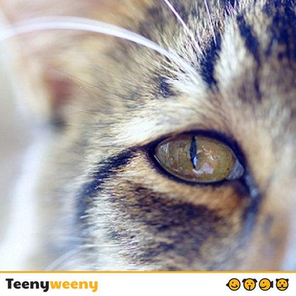 Можно ли кошке умирать дома